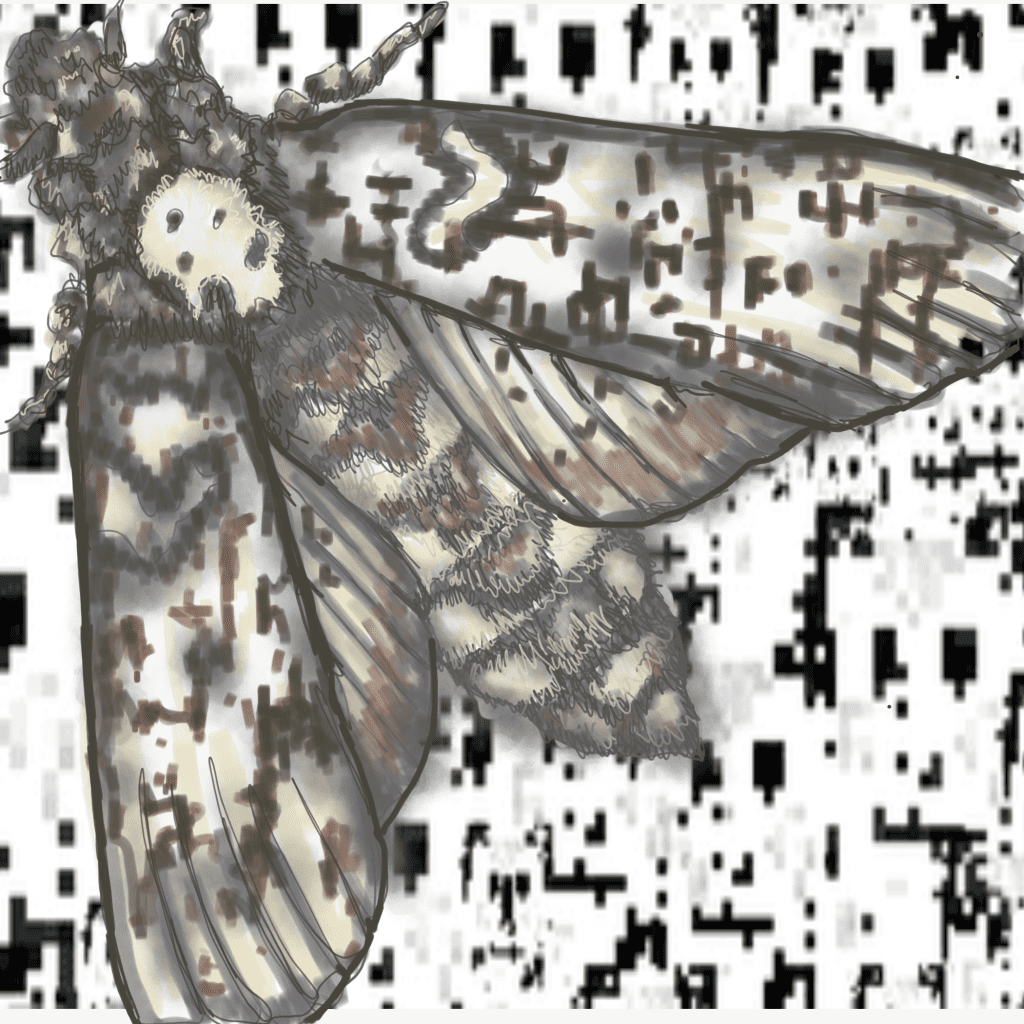 Abstract moth.