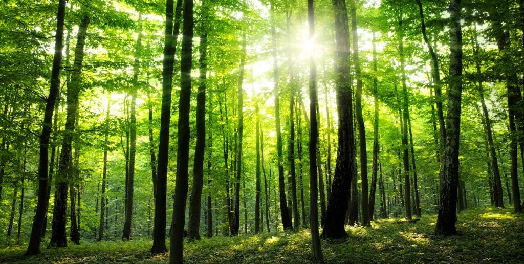 An image of a forest: sunlight shines through the dense green canopy, lighting the forest with a natural green light